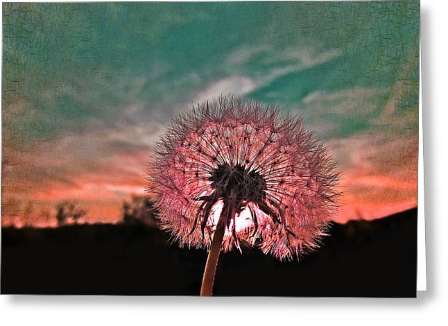 Wishes Greeting Cards - Dandelion at Sunset Greeting Card by Marianna Mills