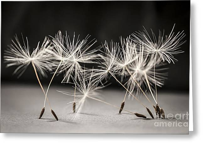 Upright Greeting Cards - Dandelion ballet Greeting Card by Elena Elisseeva