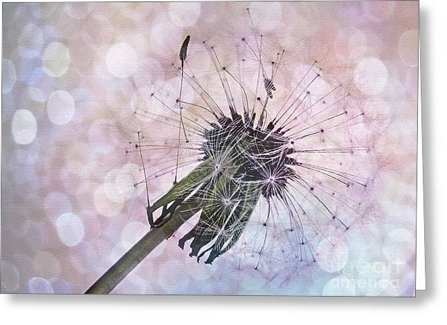 Texture Overlay Greeting Cards - Dandelion before Pretty Bokeh Greeting Card by Kaye Menner