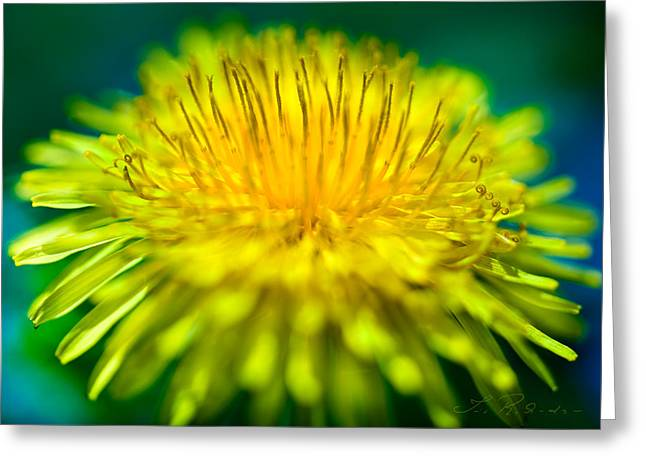 Blues And Yellows Greeting Cards - Dandelion Bloom  Greeting Card by Iris Richardson
