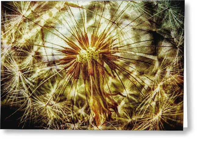 Beauty In Nature Mixed Media Greeting Cards - Dandelion Greeting Card by Todd and candice Dailey