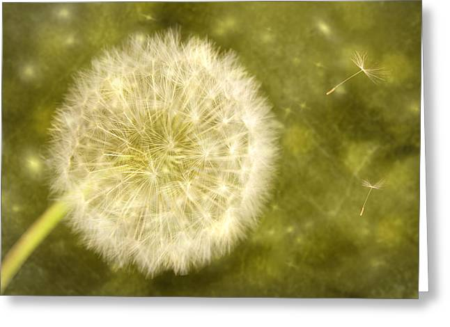 Abstract Flower Photo Greeting Cards - Dandelion Greeting Card by Amanda And Christopher Elwell