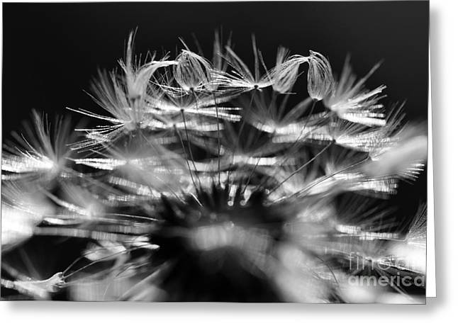 Parachute Ball Greeting Cards - Dandelion Clock Greeting Card by Laura Yamada