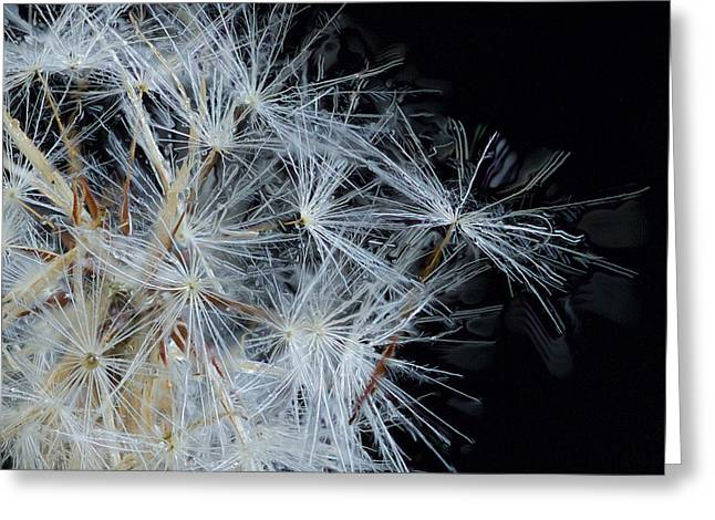 Dandelion Close Up Greeting Card by Jean Noren