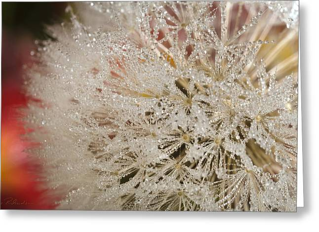 333 Greeting Cards - Dandelion Crystals Greeting Card by Iris Richardson