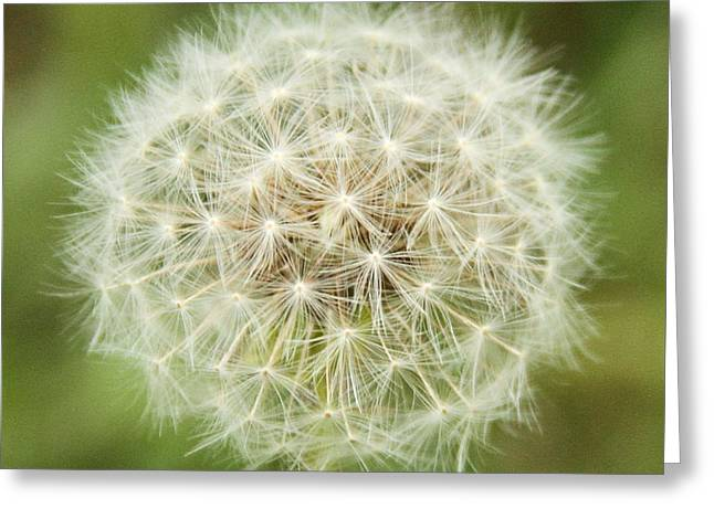 Make A Wish Greeting Card by Dan Sproul