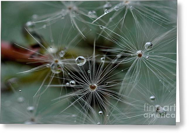 Parachute Ball Greeting Cards - Dandelion Dew Greeting Card by Laura Yamada
