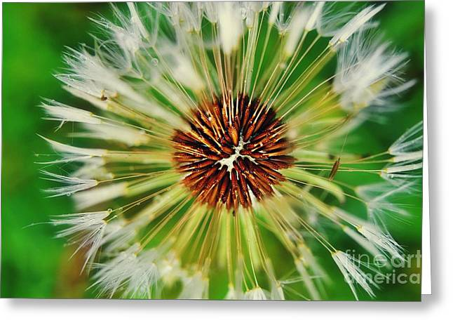 Person Greeting Cards - Dandelion Dreams Greeting Card by Peggy  Franz