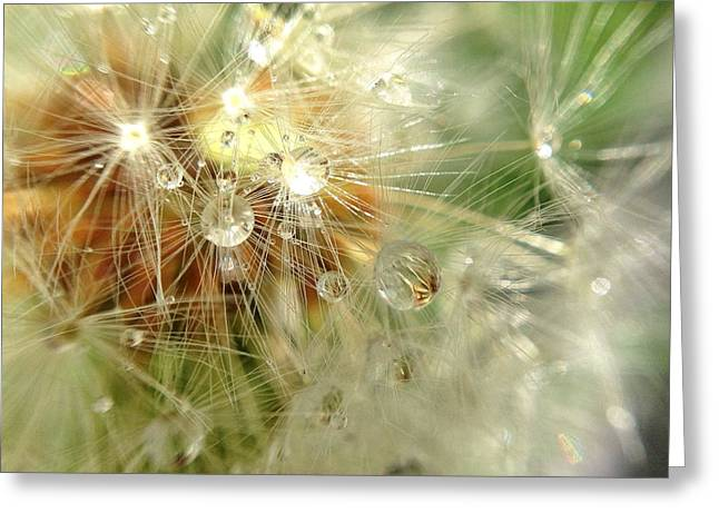 Raining Greeting Cards - Dandelion Drops Greeting Card by Nikki McInnes
