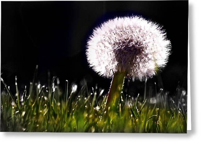 Wishes Greeting Cards - Dandelion- black and white Greeting Card by Dylana Williams