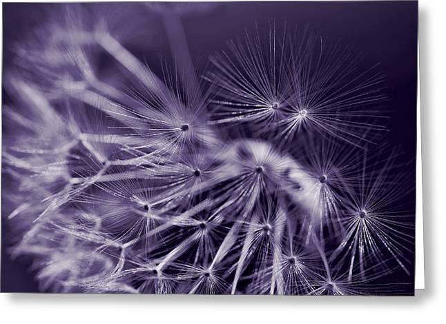 Dandelion Fly Away Dark Purple Greeting Card by Jennie Marie Schell