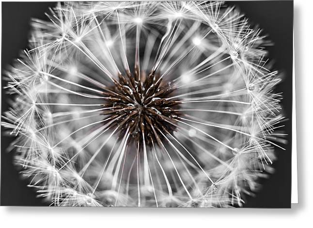 Spheres Greeting Cards - Dandelion head Greeting Card by Elena Elisseeva