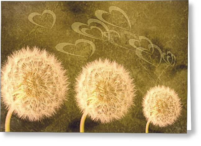 Abstract Flower Photo Greeting Cards - Dandelion Heads Greeting Card by Amanda And Christopher Elwell