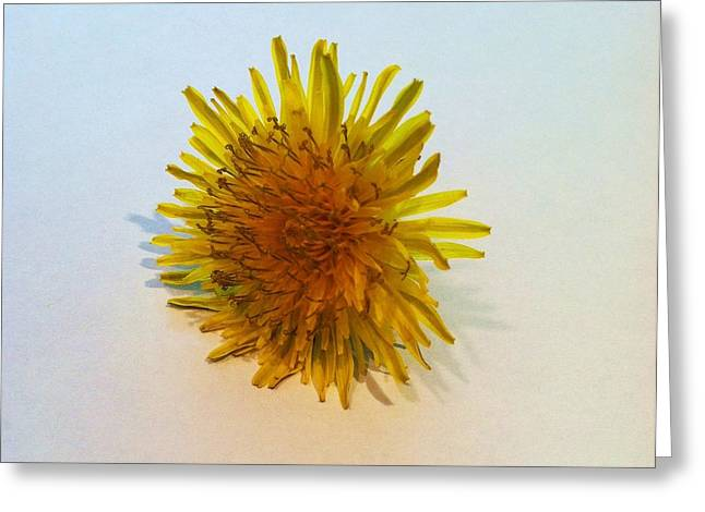 Dandelion II Greeting Card by Anna Villarreal Garbis