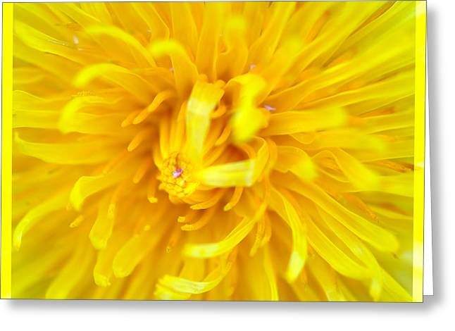 Spring Scenes Mixed Media Greeting Cards - Dandelion in macro Greeting Card by Toppart Sweden