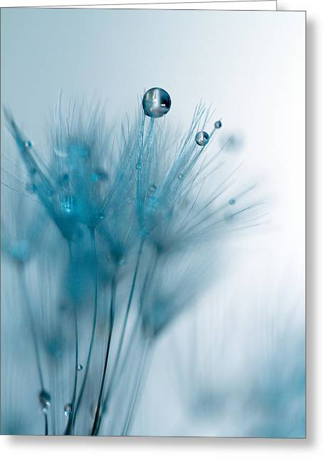 Droplet Greeting Cards - Dandelion Jewel Greeting Card by Rebecca Cozart