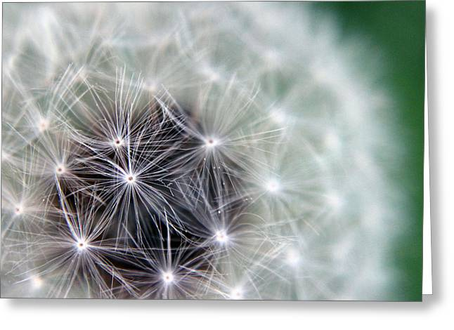 Kelly Photographs Greeting Cards - Dandelion Greeting Card by Kelly Howe