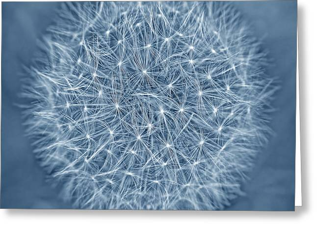 Light And Dark Greeting Cards - Dandelion Macro Abstract Dark Blue Greeting Card by Jennie Marie Schell