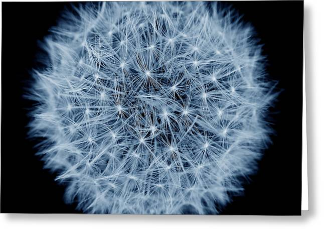 Light And Dark Greeting Cards - Dandelion Macro Abstract Midnight Blue Greeting Card by Jennie Marie Schell