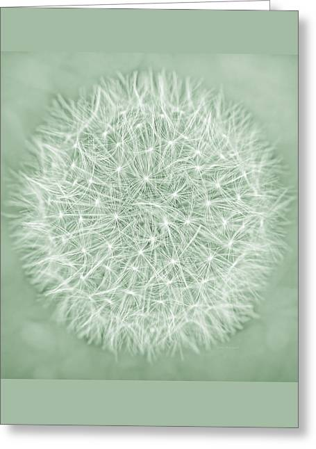 Dandelion Macro Abstract Soft Green Greeting Card by Jennie Marie Schell