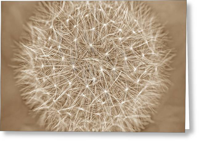 Best Sellers -  - Beige Abstract Greeting Cards - Dandelion Marco Abstract Brown Greeting Card by Jennie Marie Schell