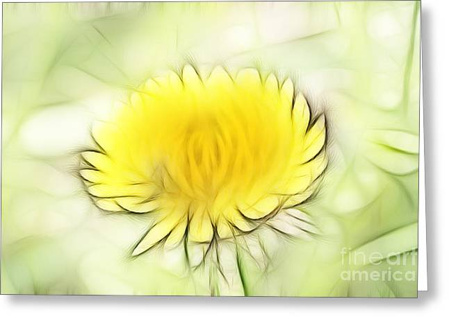 Subtle Colors Greeting Cards - Dandelion Greeting Card by Michal Boubin