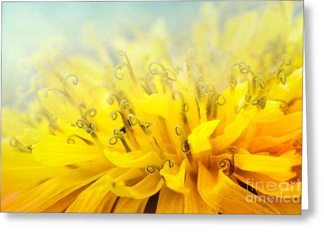 Mythja Greeting Cards - Dandelion  Greeting Card by Mythja  Photography
