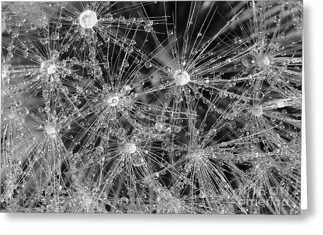 Dandelion Greeting Card by Nicholas Burningham
