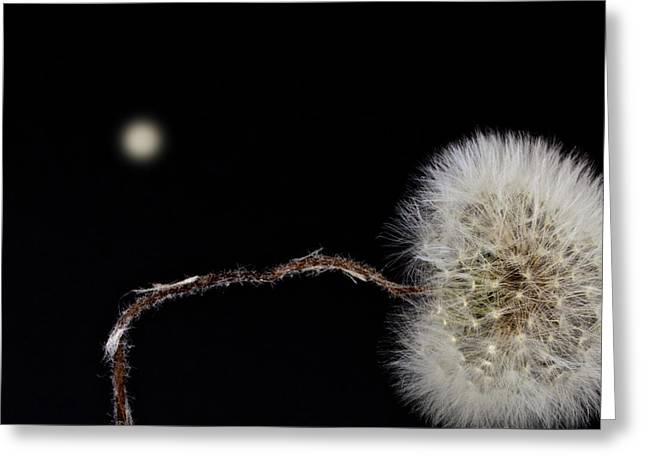 Parachute Ball Greeting Cards - Dandelion Parachute Ball Greeting Card by Bob Orsillo