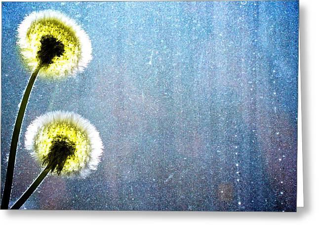 Dandelion Parachute Balls Greeting Card by Bob Orsillo