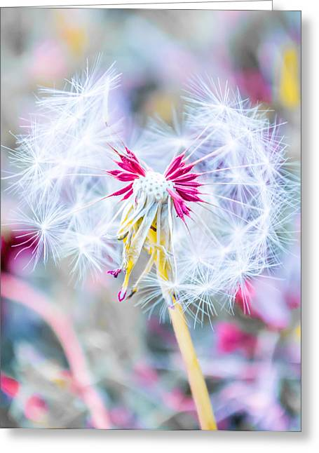 Wish Greeting Cards - Pink Dandelion Greeting Card by Parker Cunningham