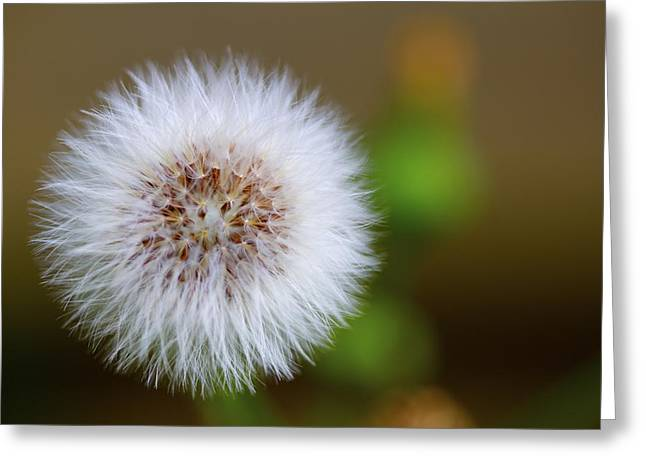 Parachute Ball Greeting Cards - Dandelion Powder Puff Parachute Ball Greeting Card by Jennifer Lamanca Kaufman