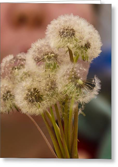 Gleaning Greeting Cards - Dandelion Puffs Greeting Card by Rebecca Dru