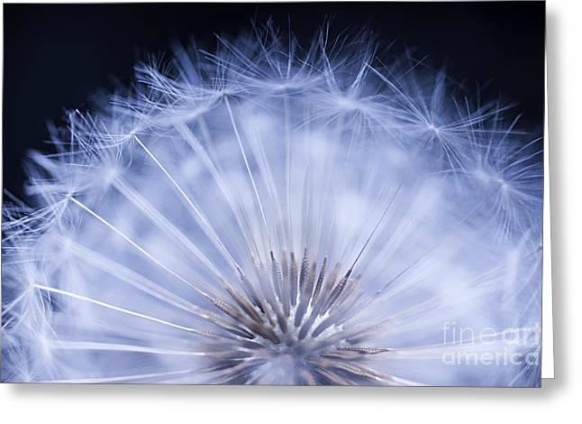 Botanical Art Greeting Cards - Dandelion rising Greeting Card by Elena Elisseeva