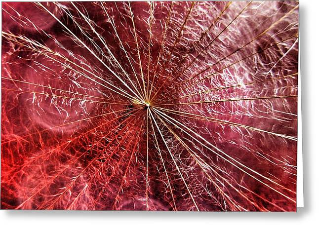 Dandelion Seed Abstract Greeting Card by Marianna Mills
