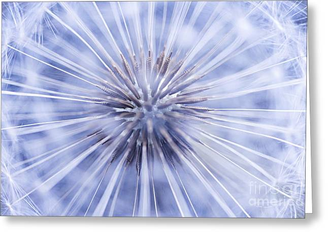 Dandelion Seeds Greeting Card by Elena Elisseeva