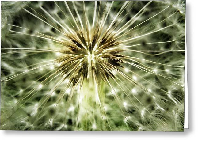 Wishes Greeting Cards - Dandelion Seeds Greeting Card by Marianna Mills