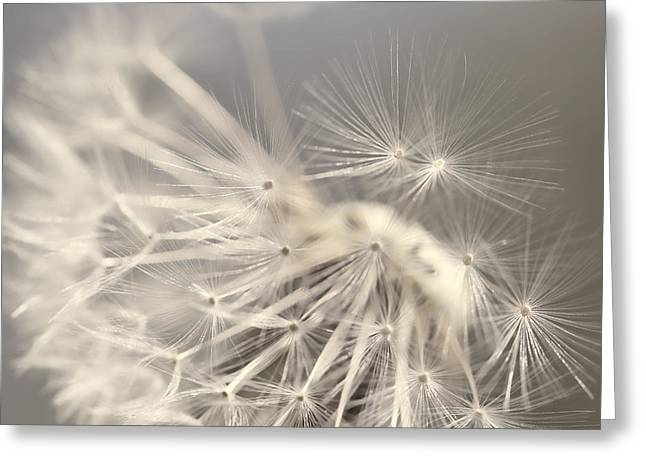 Light Taupe Greeting Cards - Dandelion Weed Soft Gray Brown Greeting Card by Jennie Marie Schell