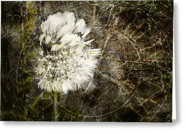Wishes Greeting Cards - Dandelions Dont Care About the Time Greeting Card by Belinda Greb