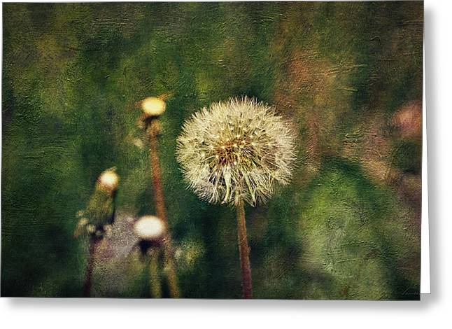 Biological Digital Art Greeting Cards - Dandelions Greeting Card by Maria Angelica Maira