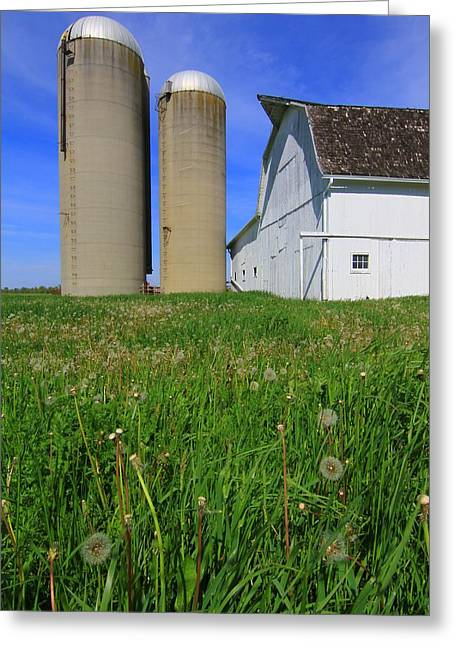 Summer On The Farm Greeting Cards - Dandelions On The Farm Greeting Card by Dan Sproul