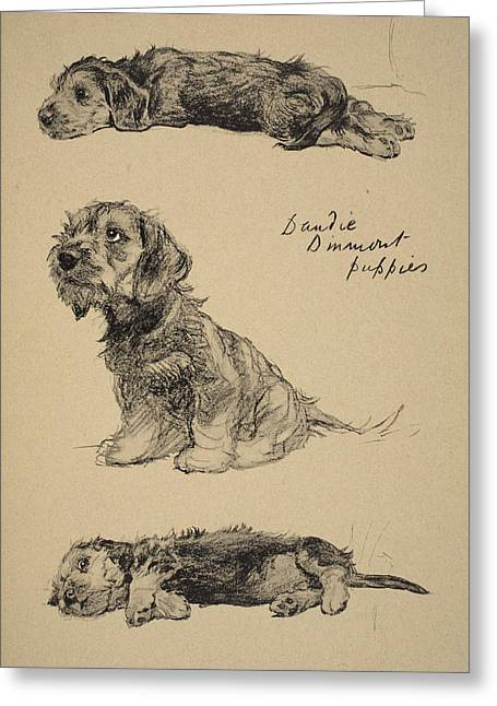 Black Dogs Greeting Cards - Dandie Dinmont Puppies, 1930 Greeting Card by Cecil Charles Windsor Aldin