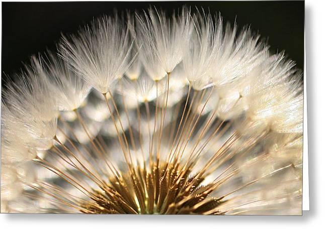 Dandelion Greeting Cards - Dandy Greeting Card by Jeff Klingler