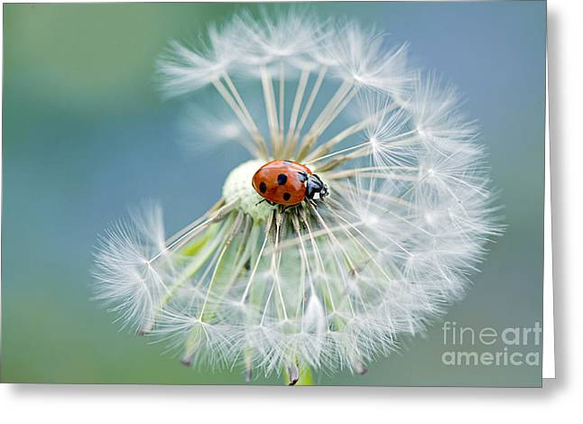 Ladybird Greeting Cards - Dandy lady Greeting Card by Jacky Parker