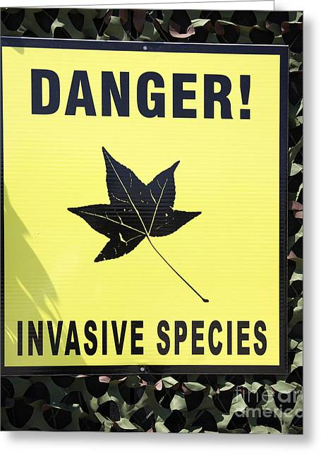 Fianna Greeting Cards - Danger Invasive Species sign Greeting Card by Ros Drinkwater