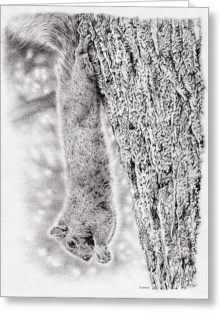 Creature Eating Greeting Cards - Dangling Squirrel Greeting Card by Heidi Vormer