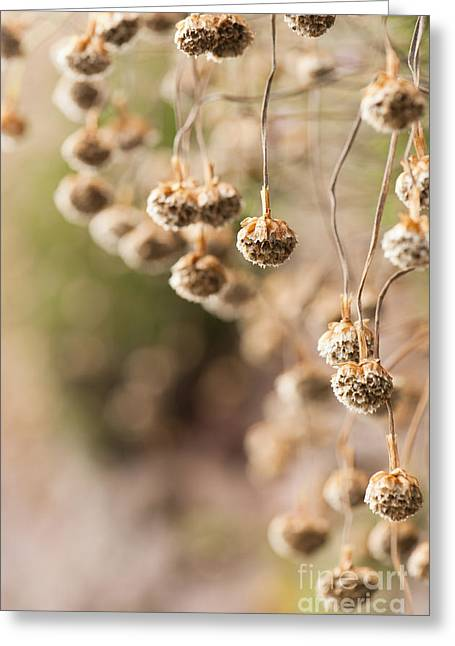 Neutral Background Greeting Cards - Dangling Thrift Greeting Card by Anne Gilbert