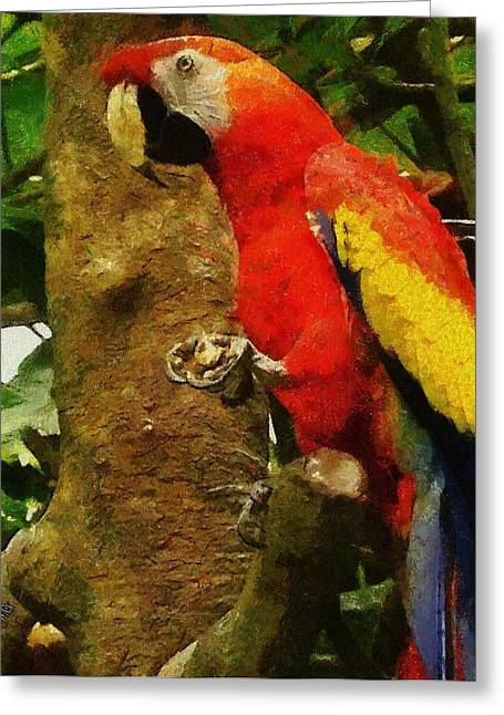 Macaw Greeting Cards - Danse Macaw Greeting Card by Jeff Kolker