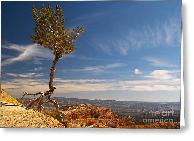 Tree Roots Greeting Cards - Danse Sur Pointes Greeting Card by Alex Cassels
