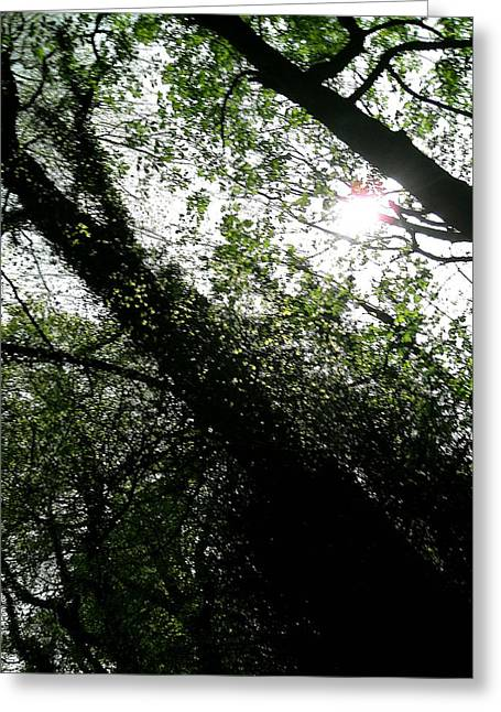 Greetingcard Greeting Cards - Dappled Forest Greeting Card by Patrick J Murphy